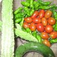 8月3日の収穫2